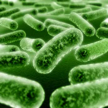 Is Your Acne Caused By Yeast Overgrowth?