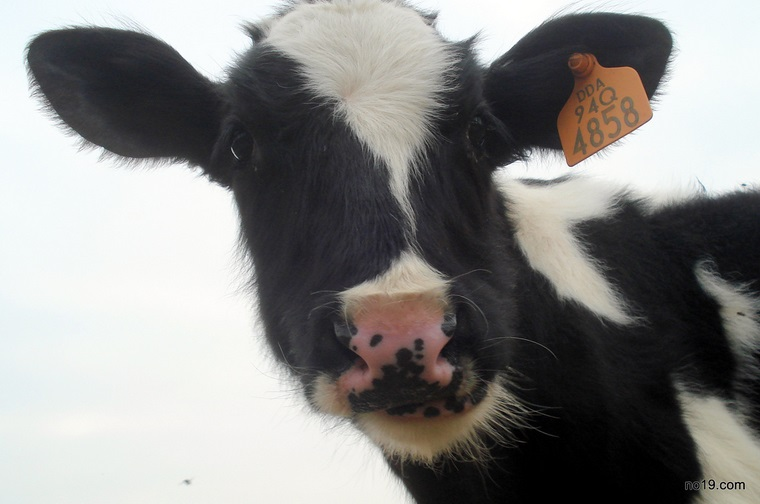 Milk – The Missing Link to Teen Acne?